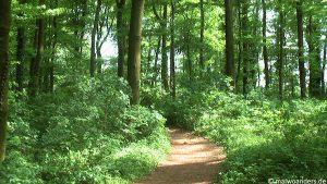 Von Billerbeck durch die Baumberge