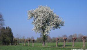 Frühjahrsradtour durchs Münsterland