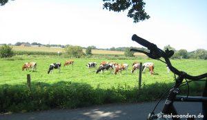 Werseradweg von Münster nach Albersloh | Radtour